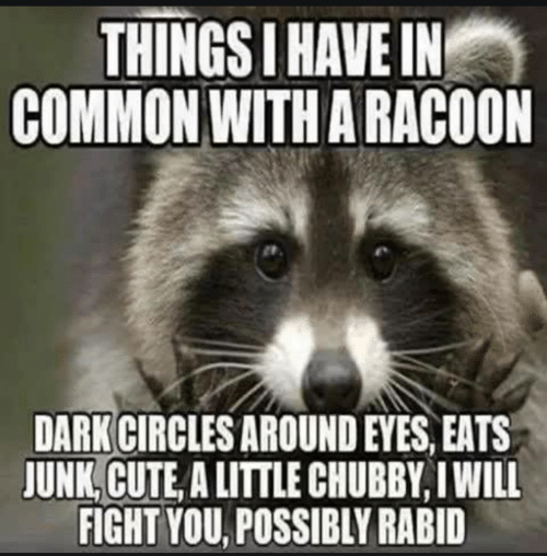 Circles: THINGS I HAVE IN  COMMON WITH A RACOON  DARK CIRCLES AROUND EYES, EATS  JUNK, CUTE, A LITTLE CHUBBY, I WILL  FIGHT YOU, POSSIBLY RABID