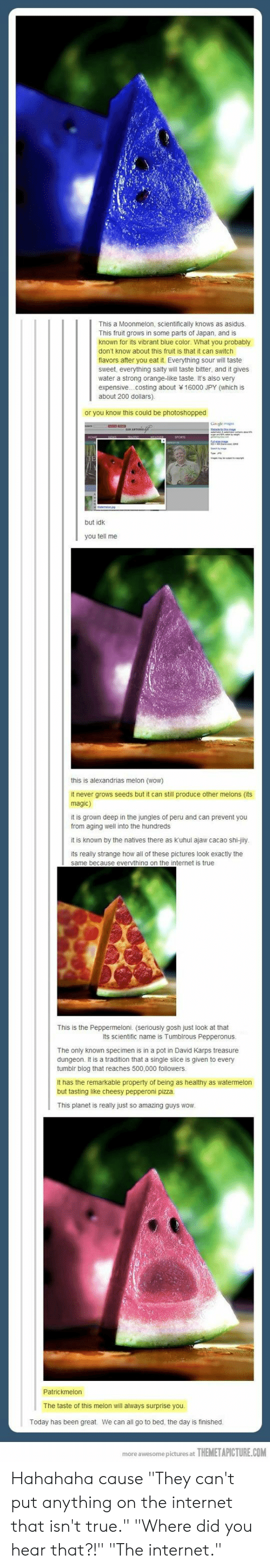 """Internet, Pizza, and Being Salty: This a Moonmelon, scientifically knows as asidus  This fruit grows in some parts of Japan, and is  known for its vibrant blue color. What you probably  don't know about this fruit is that it can switch  flavors after you eat it. Everything sour will taste  sweet, everything salty will taste bitter, and it gives  water a strong orange-like taste. It's also very  expensive...costing about 16000 JPY (which is  about 200 dollars)  or you know this could be photoshopped  but idk  you tell me  this is alexandrias melon (wow)  it never grows seeds but it can still produce other melons (its  magic)  it is grown deep in the jungles of peru and can prevent you  from aging well into the hundreds  it is known by the natives there as kuhul ajaw cacao shi-jily  its really strange how all of these pictures look exactly the  same because evervthing on the internet is true  This is the Peppermeloni. (seriously gosh just look at that  Its scientific name is Tumblrous Pepperonus  The only known specimen is in a pot in David Karps treasure  dungeon. It is a tradition that a single slice is given to every  tumbir blog that reaches 500,000 followers  It has the remarkable property of being as healthy as watermelon  but tasting like cheesy pepperoni pizza  This planet is really just so amazing guys wow  The taste of this melon wil always surprise you  Today has been great  We can all go to bed, the day is finished  more awesome pictures at  THEMETAPICTURE.COM Hahahaha cause """"They can't put anything on the internet that isn't true."""" """"Where did you hear that?!"""" """"The internet."""""""