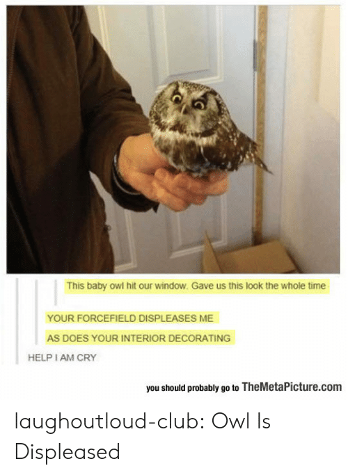 Club, Tumblr, and Blog: This baby owl hit our window. Gave us this look the whole time  YOUR FORCEFIELD DISPLEASES ME  AS DOES YOUR INTERIOR DECORATING  HELP I AM CRY  you should probably go to TheMetaPicture.com laughoutloud-club:  Owl Is Displeased