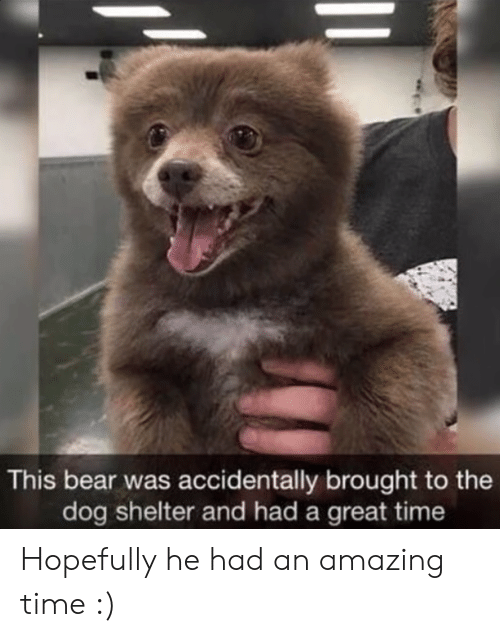 Bear, Time, and Amazing: This bear was accidentally brought to the  dog shelter and had a great time Hopefully he had an amazing time :)