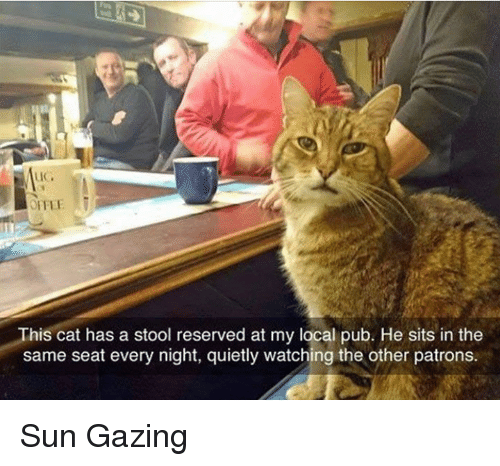 Memes, 🤖, and Sun: This cat has a stool reserved at my local pub. He sits in the  same seat every night, quietly watching the other patrons. Sun Gazing
