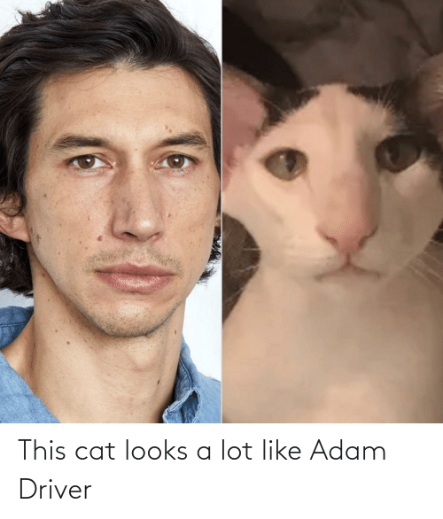 Lot: This cat looks a lot like Adam Driver