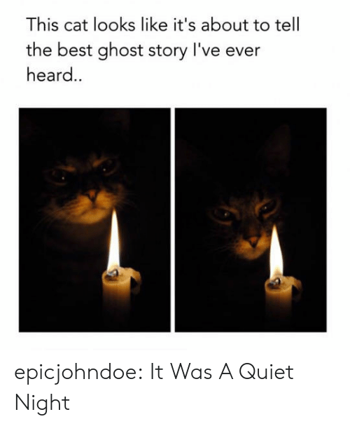 Tumblr, Best, and Blog: This cat looks like it's about to tell  the best ghost story l've ever  heard. epicjohndoe:  It Was A Quiet Night