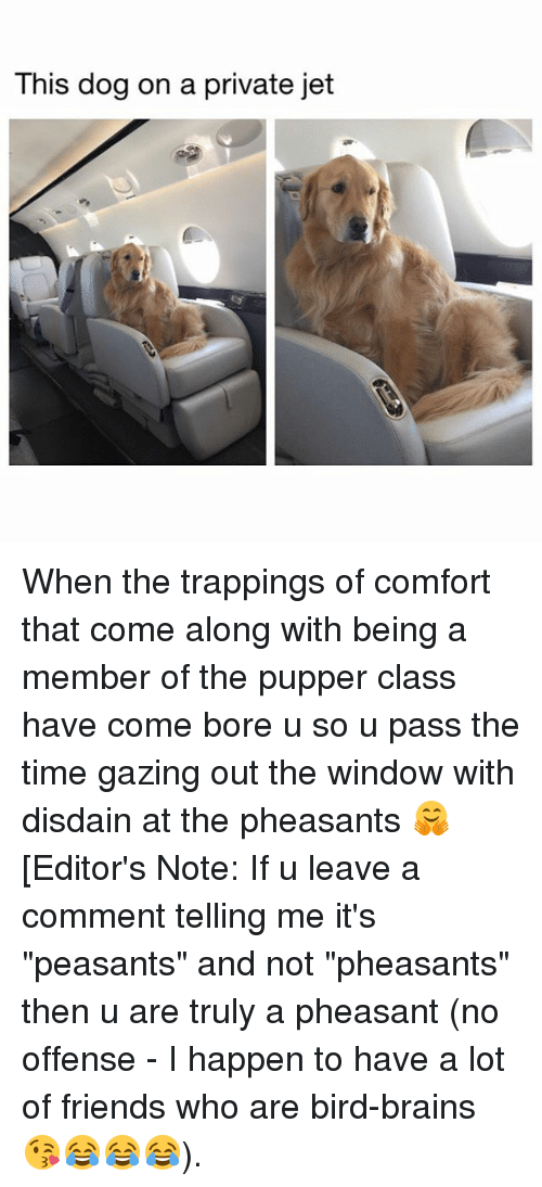 """comfortability: This dog on a private jet When the trappings of comfort that come along with being a member of the pupper class have come bore u so u pass the time gazing out the window with disdain at the pheasants 🤗 [Editor's Note: If u leave a comment telling me it's """"peasants"""" and not """"pheasants"""" then u are truly a pheasant (no offense - I happen to have a lot of friends who are bird-brains 😘😂😂😂)."""