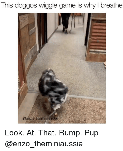 Memes, Game, and Pup: This doggos wiggle game is why I breathe  @enzo theminiaussie Look. At. That. Rump. Pup @enzo_theminiaussie