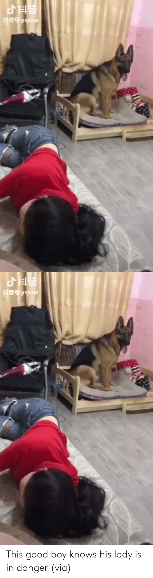 boy: This good boy knows his lady is in danger(via)