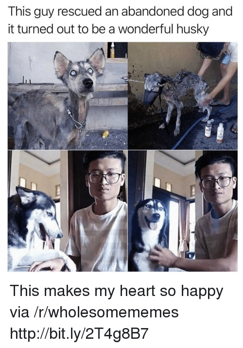 Happy, Heart, and Http: This guy rescued an abandoned dog and  it turned out to be a wonderful husky This makes my heart so happy via /r/wholesomememes http://bit.ly/2T4g8B7