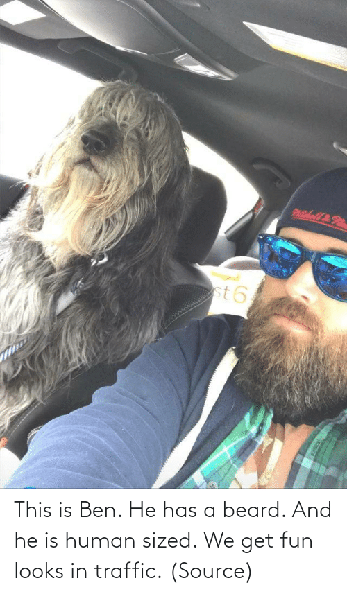 human: This is Ben. He has a beard. And he is human sized. We get fun looks in traffic. (Source)