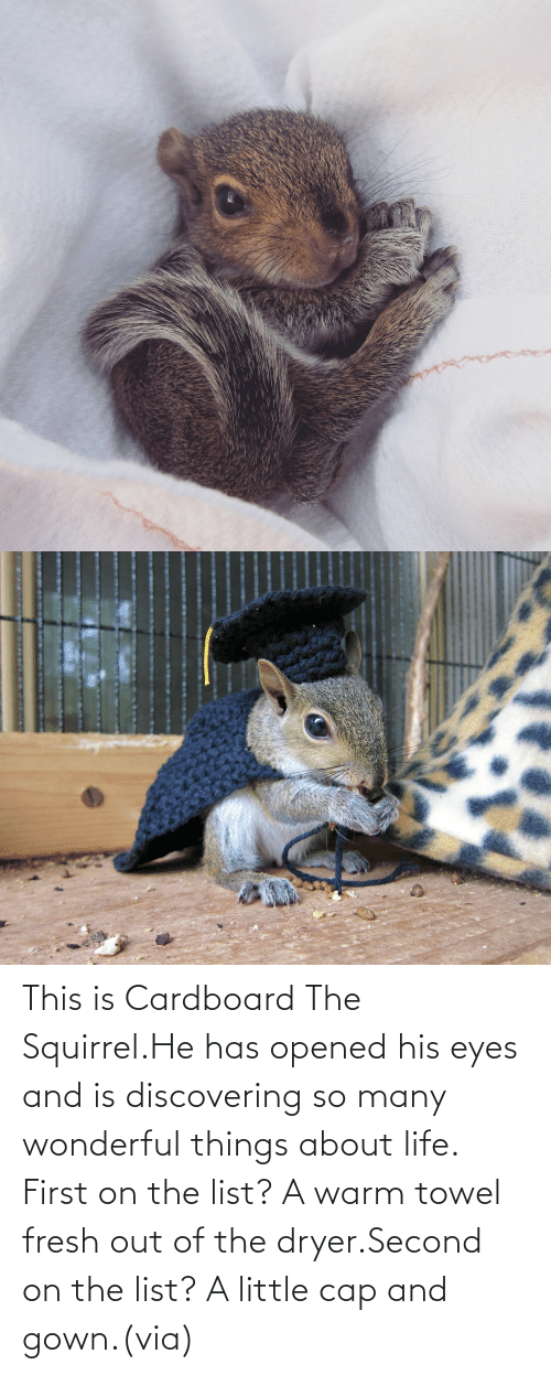 cap: This is Cardboard The Squirrel.He has opened his eyes and is discovering so many wonderful things about life. First on the list? A warm towel fresh out of the dryer.Second on the list? A little cap and gown.(via)