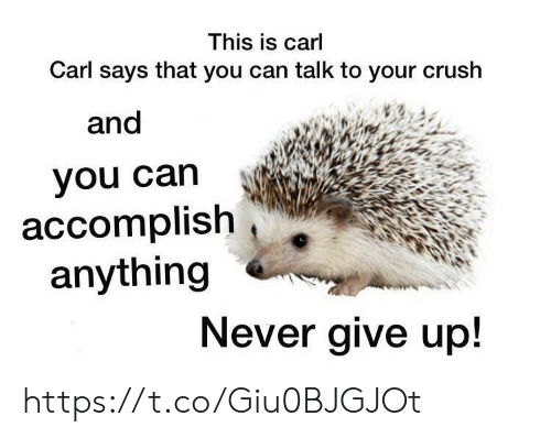 This Is Carl Carl Says That You Can Talk to Your Crush and