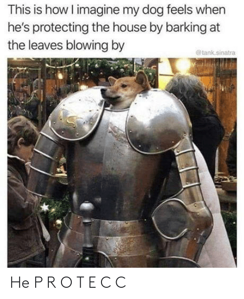 tank: This is how I imagine my dog feels when  he's protecting the house by barking at  the leaves blowing by  @tank.sinatra He P R O T E C C