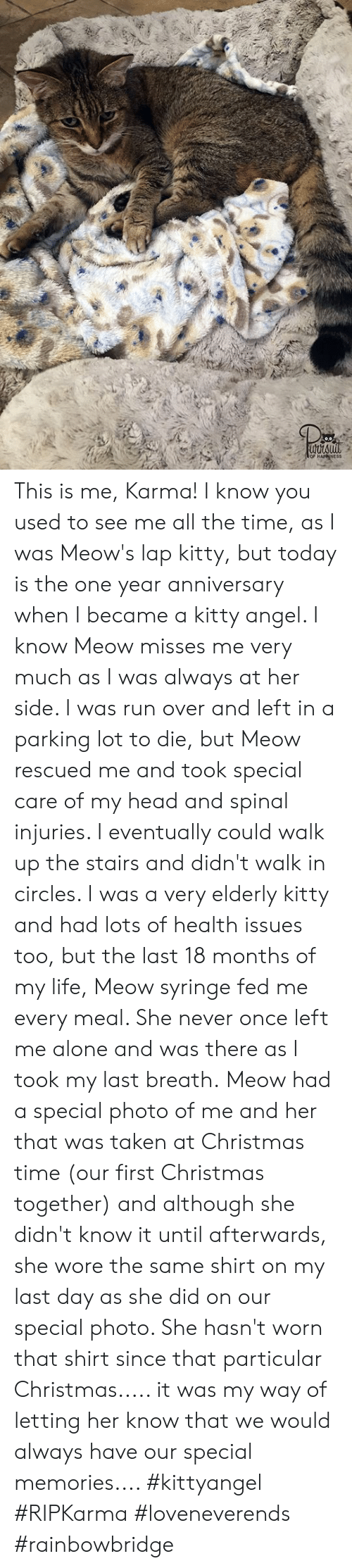 Being Alone, Christmas, and Head: This is me, Karma! I know you used to see me all the time, as I was Meow's lap kitty, but today is the one year anniversary when I became a kitty angel. I know Meow misses me very much as I was always at her side. I was run over and left in a parking lot to die, but Meow rescued me and took special care of my head and spinal injuries. I eventually could walk up the stairs and didn't walk in circles. I was a very elderly kitty and had lots of health issues too, but the last 18 months of my life, Meow syringe fed me every meal. She never once left me alone and was there as I took my last breath. Meow had a special photo of me and her that was taken at Christmas time (our first Christmas together) and although she didn't know it until afterwards, she wore the same shirt on my last day as she did on our special photo. She hasn't worn that shirt since that particular Christmas..... it was my way of letting her know that we would always have our special memories.... #kittyangel #RIPKarma #loveneverends #rainbowbridge