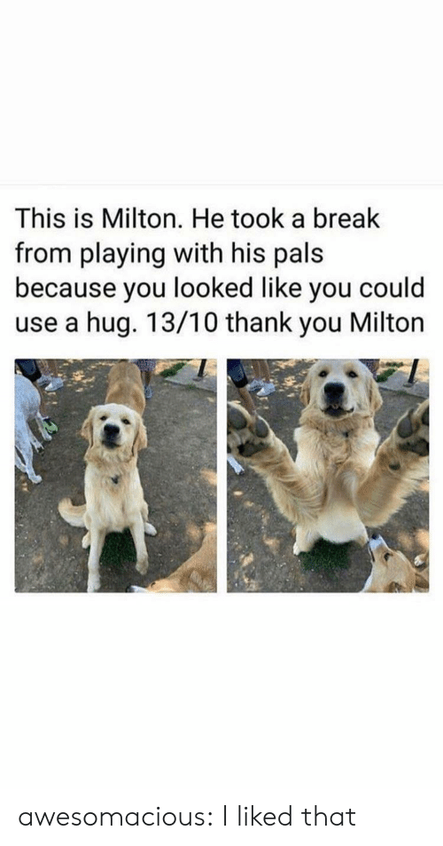 I Liked: This is Milton. He took a break  from playing with his pals  because you looked like you could  use a hug. 13/10 thank you Milton awesomacious:  I liked that