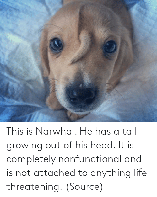 Life: This is Narwhal. He has a tail growing out of his head. It is completely nonfunctional and is not attached to anything life threatening. (Source)