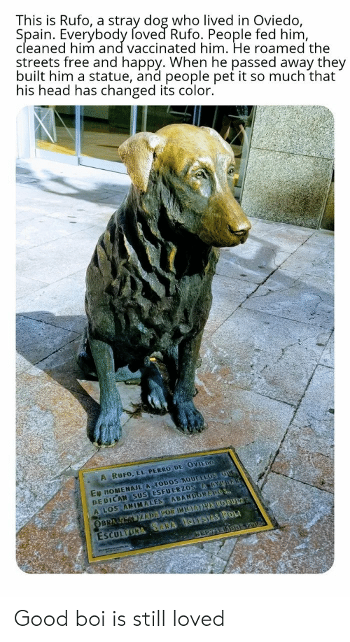 sus: This is Rufo, a stray dog who lived in Oviedo,  Spain. Everybody foved Rufo. People fed him,  cleaned him and vaccinated him. He roamed the  streets free and happy. When he passed away they  built him a statue, and people pet it so much that  his head has changed its color.  A RUFO, EL PERRO DE OVIEDO  EN HOMENAJE A TODOS AQUELLOS OUG  DEDICAN SUS ESFUERZOS AAYUDA  A LOS ANIMALES ABANDONAPOS  ESCULTORA SARA IGLESIAS POL  SEPTEDBREV01  OBRA K KIZDAPOR INIEATVA POPULAR Good boi is still loved