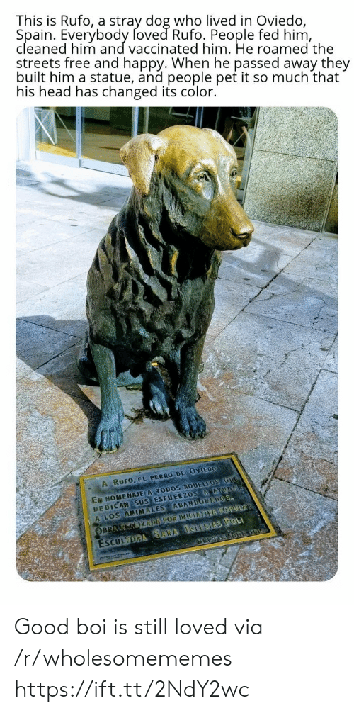 sus: This is Rufo, a stray dog who lived in Oviedo,  Spain. Everybody foved Rufo. People fed him,  cleaned him and vaccinated him. He roamed the  streets free and happy. When he passed away they  built him a statue, and people pet it so much that  his head has changed its color.  A RUFO, EL PERRO DE OVIEDO  EN HOMENAJE A TODOS AQUELLOS OUG  DEDICAN SUS ESFUERZOS AAYUDA  A LOS ANIMALES ABANDONAPOS  ESCULTORA SARA IGLESIAS POL  SEPTEDBREV01  OBRA K KIZDAPOR INIEATVA POPULAR Good boi is still loved via /r/wholesomememes https://ift.tt/2NdY2wc