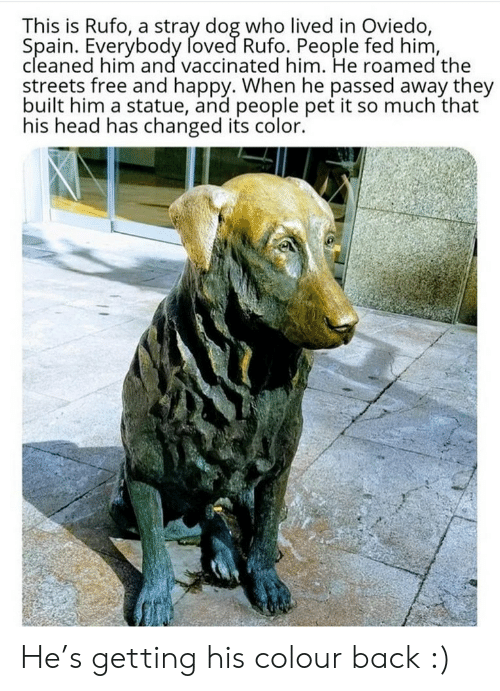 the streets: This is Rufo, a stray dog who lived in Oviedo,  Spain. Everybody foved Rufo. People fed him,  cleaned him and vaccinated him. He roamed the  streets free and happy. When he passed away they  built him a statue, and people pet it so much that  his head has changed its color. He's getting his colour back :)