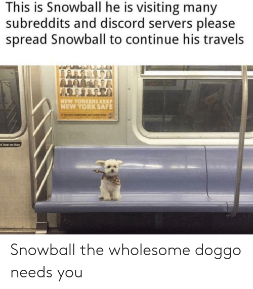 Lean, New York, and Reddit: This is Snowball he is visiting many  subreddits and discord servers please  spread Snowball to continue his travels  UTUTBOY  NEW YORKERS KEEP  NEW YORK SAFE  t lean on door Snowball the wholesome doggo needs you