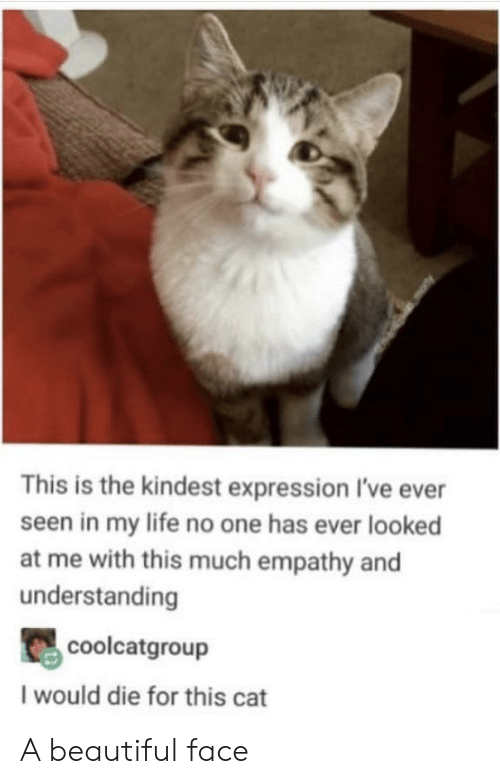 Empathy: This is the kindest expression I've ever  seen in my life no one has ever looked  at me with this much empathy and  understanding  coolcatgroup  I would die for this cat A beautiful face