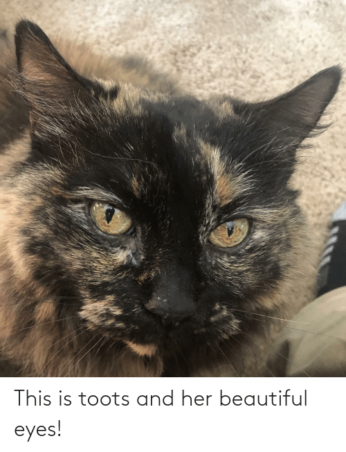 Toots: This is toots and her beautiful eyes!