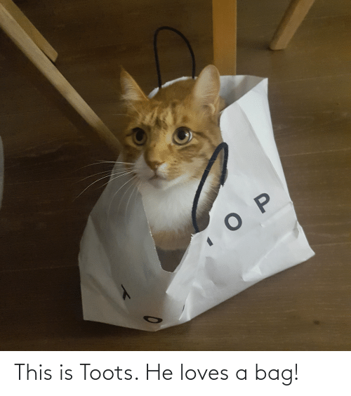 Toots: This is Toots. He loves a bag!