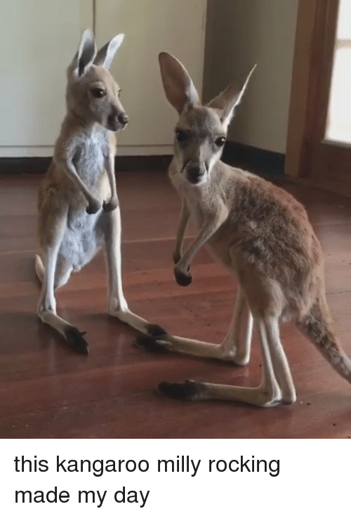 Funny, Milly Rock, and Kangaroo: this kangaroo milly rocking made my day