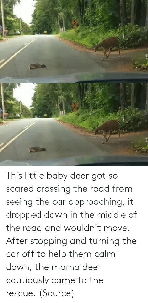 Baby: This little baby deer got so scared crossing the road from seeing the car approaching, it dropped down in the middle of the road and wouldn't move. After stopping and turning the car off to help them calm down, the mama deer cautiously came to the rescue. (Source)