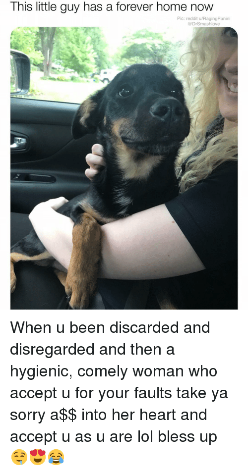 Bless Up, Lol, and Memes: This little guy has a forever home now  Pic: reddit u/RagingPanini  @DrSmashlove When u been discarded and disregarded and then a hygienic, comely woman who accept u for your faults take ya sorry a$$ into her heart and accept u as u are lol bless up 🤤😍😂