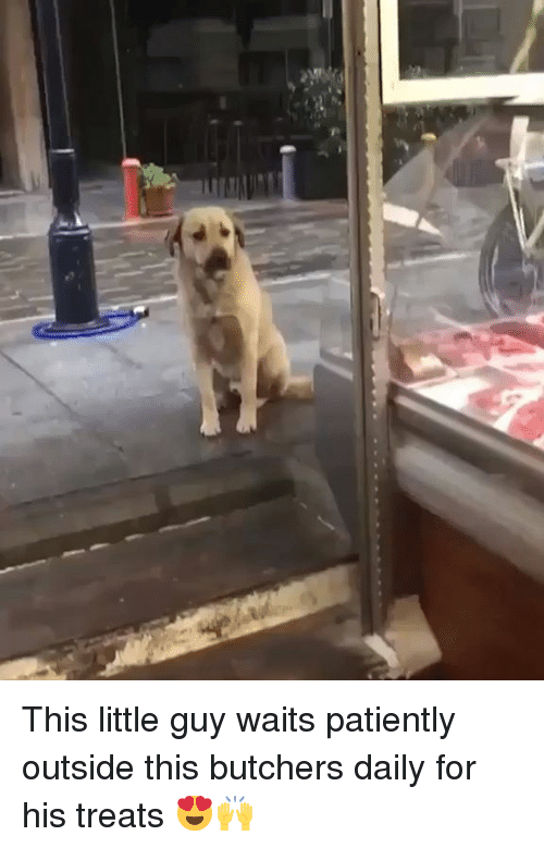 Dank, 🤖, and For: This little guy waits patiently outside this butchers daily for his treats 😍🙌
