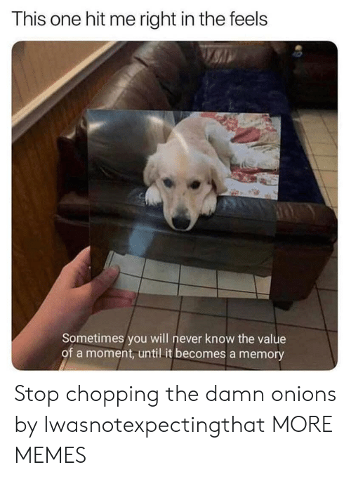 Dank, Memes, and Target: This one hit me right in the feels  Sometimes you will never know the value  of a moment, until it becomes a memory Stop chopping the damn onions by Iwasnotexpectingthat MORE MEMES