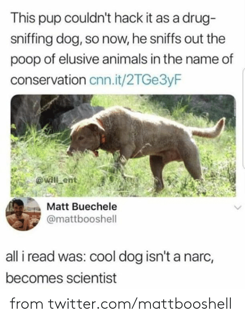 Animals, cnn.com, and Dank: This pup couldn't hack it as a drug-  sniffing dog, so now, he sniffs out the  poop of elusive animals in the name of  conservation cnn.it/2TGe3yF  @will ent  Matt Buechele  @mattbooshell  all i read was: cool dog isn't a narc,  becomes scientist from twitter.com/mattbooshell