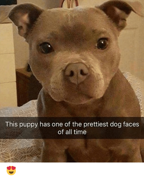 Dog Faces: This puppy has one of the prettiest dog faces  of all time 😍