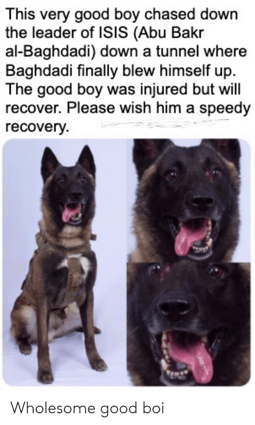 Blew: This very good boy chased down  the leader of ISIS (Abu Bakr  al-Baghdadi) down a tunnel where  Baghdadi finally blew himself up  The good boy was injured but will  recover. Please wish him a speedy  recovery Wholesome good boi