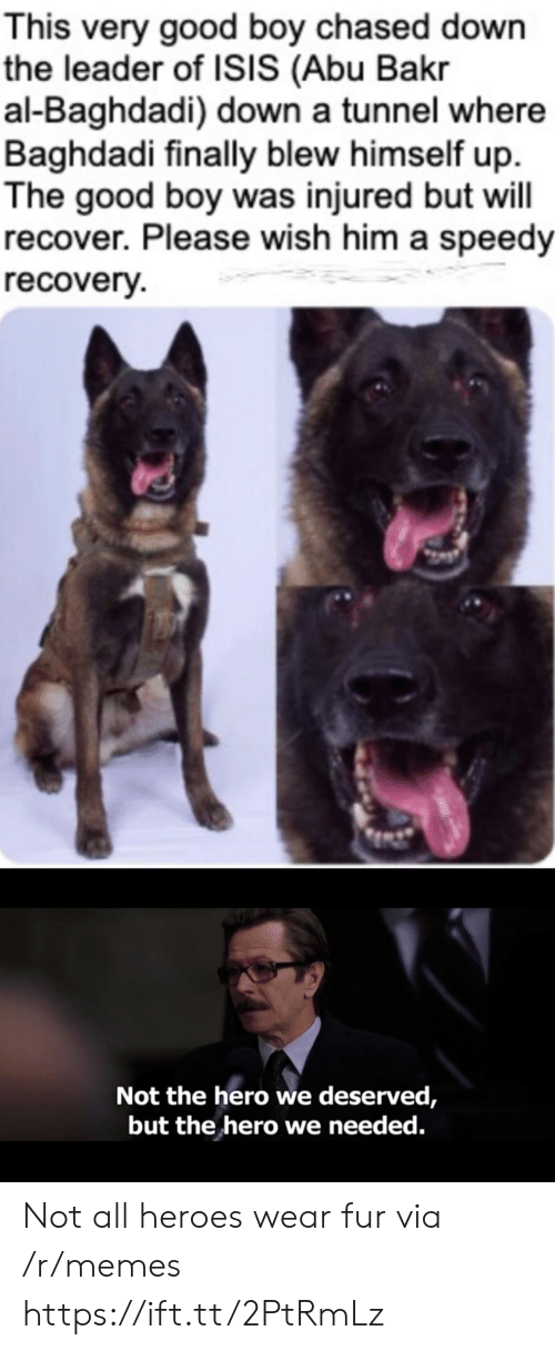 Blew: This very good boy chased down  the leader of ISIS (Abu Bakr  al-Baghdadi) down a tunnel where  Baghdadi finally blew himself up  The good boy was injured but will  recover. Please wish him a speedy  recovery  Not the hero we deserved,  but the hero we needed. Not all heroes wear fur via /r/memes https://ift.tt/2PtRmLz