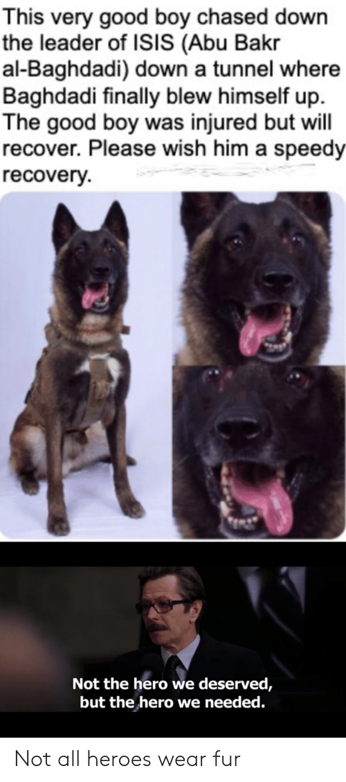 Blew: This very good boy chased down  the leader of ISIS (Abu Bakr  al-Baghdadi) down a tunnel where  Baghdadi finally blew himself up  The good boy was injured but will  recover. Please wish him a speedy  recovery  Not the hero we deserved,  but the hero we needed. Not all heroes wear fur