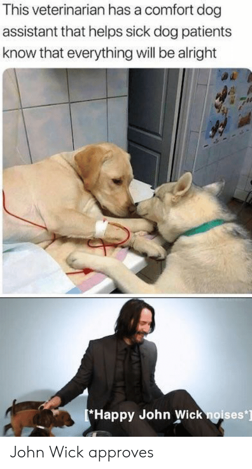 John Wick, Happy, and Veterinarian: This veterinarian has a comfort dog  assistant that helps sick dog patients  know that everything will be alright  Happy John Wick noises] John Wick approves