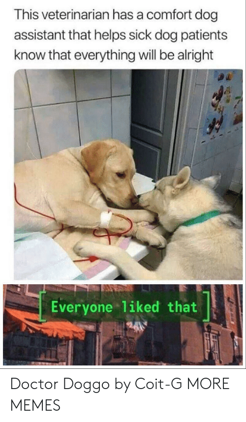 Dank, Doctor, and Memes: This veterinarian has a comfort dog  assistant that helps sick dog patients  know that everything will be alright  Everyone 1iked that Doctor Doggo by Coit-G MORE MEMES