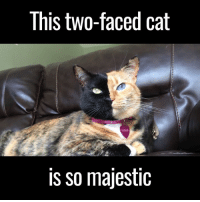 two faced