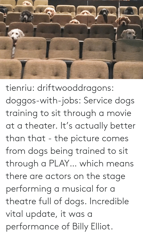Actually: tienriu: driftwooddragons:  doggos-with-jobs: Service dogs training to sit through a movie at a theater. It's actually better than that - the picture comes from dogs being trained to sit through a PLAY… which means there are actors on the stage performing a musical for a theatre full of dogs.   Incredible vital update,  it was a performance of Billy Elliot.