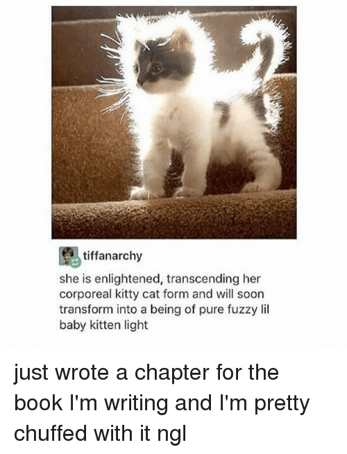 Soon..., Tumblr, and Book: tiffanarchy  she is enlightened, transcending her  corporeal kitty cat form and will soon  transform into a being of pure fuzzy lil  baby kitten light just wrote a chapter for the book I'm writing and I'm pretty chuffed with it ngl