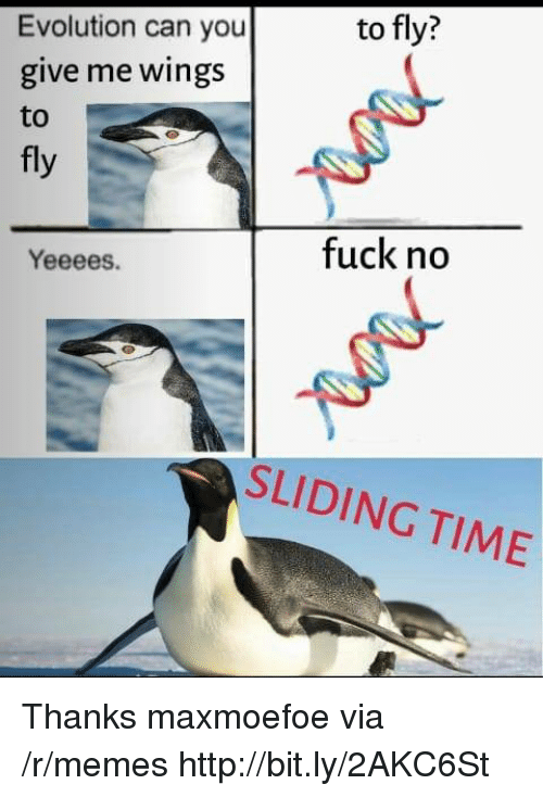 Memes, Evolution, and Fuck: to fly?  Evolution can you  give me wings  to  fly  fuck no  Yeeees.  SLIDING TIME Thanks maxmoefoe via /r/memes http://bit.ly/2AKC6St