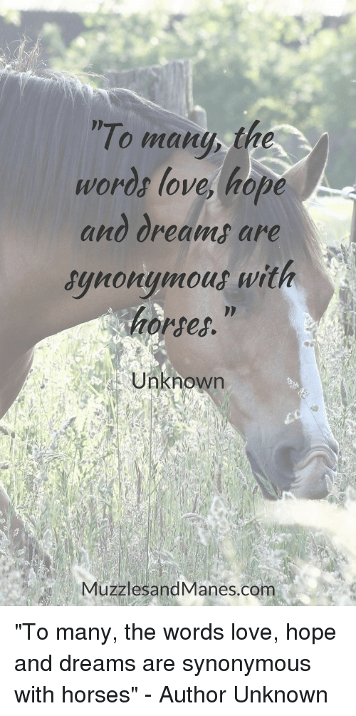 """Horses, Love, and Dreams: To many the  words love, hope  and dreams are  synonymout with  horses.""""  Unknown  MuzzlesandManes.com """"To many, the words love, hope and dreams are synonymous with horses"""" - Author Unknown"""