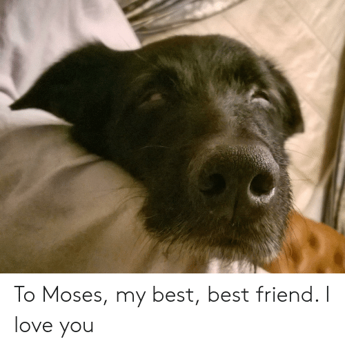 Best Friend, Love, and I Love You: To Moses, my best, best friend. I love you