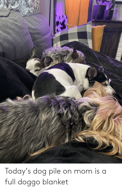 pile on: Today's dog pile on mom is a full doggo blanket