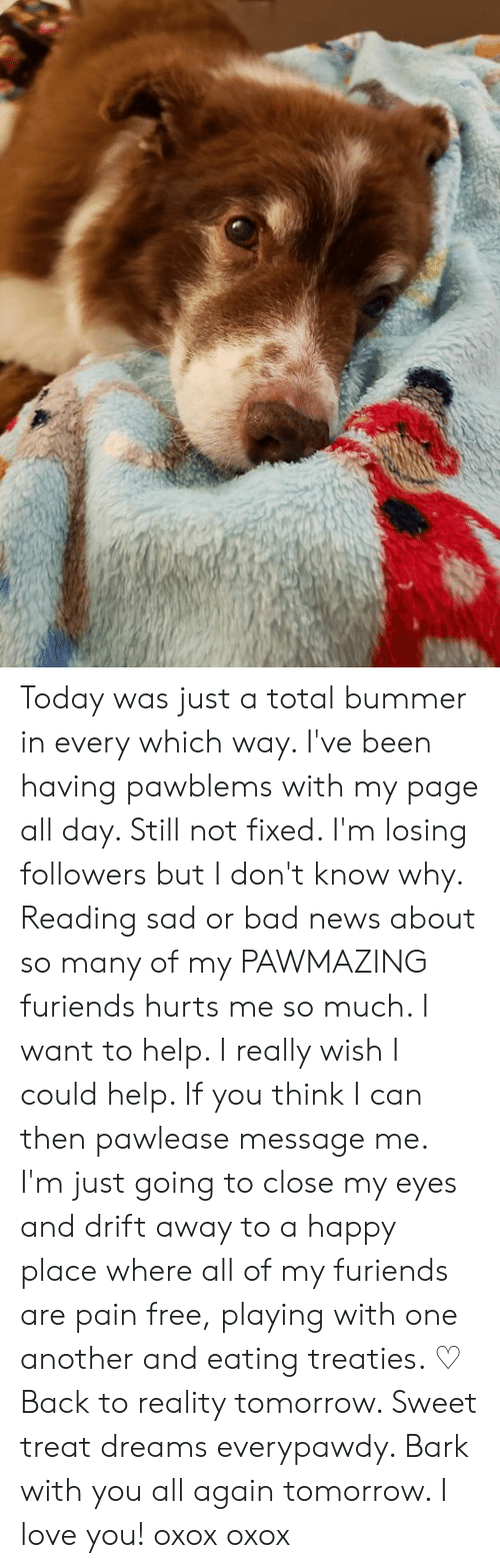 Bad, Love, and Memes: Today was just a total bummer in every which way.  I've been having pawblems with my page all day. Still not fixed.   I'm losing followers but I don't know why.  Reading sad or bad news about so many of my PAWMAZING furiends hurts me so much.  I want to help. I really wish I could help. If you think I can then pawlease message me.  I'm just going to close my eyes and drift away to a happy place where all of my furiends are pain free, playing with one another and eating treaties.  ♡ Back to reality tomorrow.   Sweet treat dreams everypawdy. Bark with you all again tomorrow. I love you! oxox oxox
