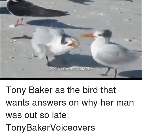 Ðÿ†: TONY BAKER  DY Tony Baker as the bird that wants answers on why her man was out so late. TonyBakerVoiceovers