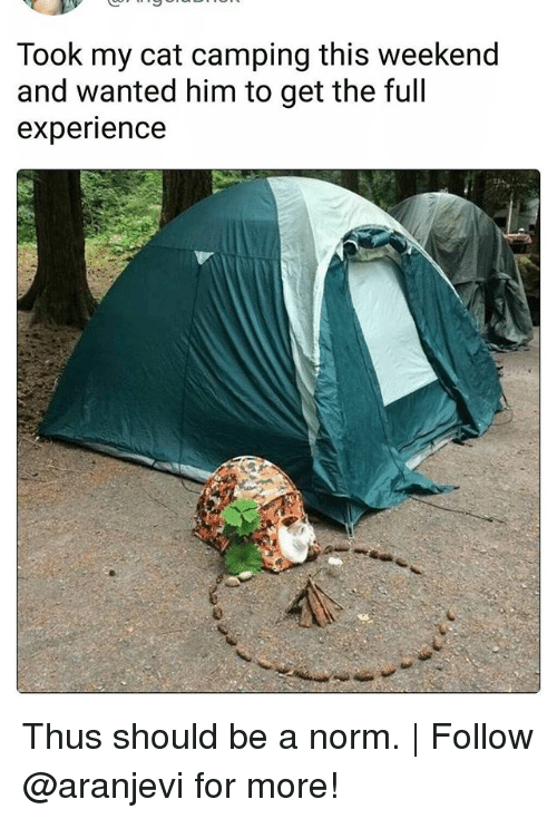 weekender: Took my cat camping this weekend  and wanted him to get the full  experience Thus should be a norm. | Follow @aranjevi for more!