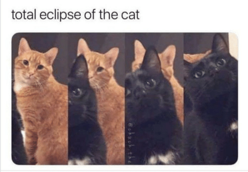 Eclipse, Cat, and Total: total eclipse of the cat  cko the