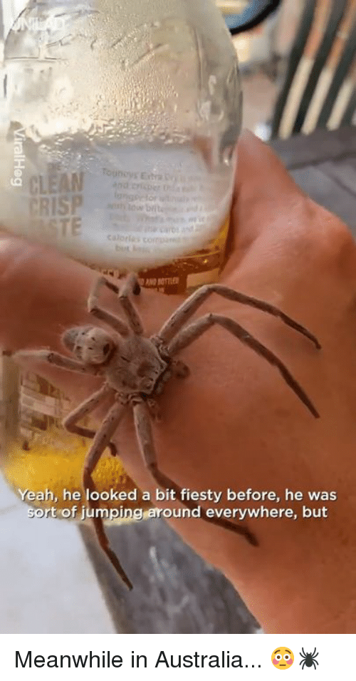 Dank, Yeah, and Australia: Tounoys Exta  CRISP  Cuatles  Yeah, he looked a bit fiesty before, he was  t of jumpingaround everywhere, but Meanwhile in Australia... 😳🕷