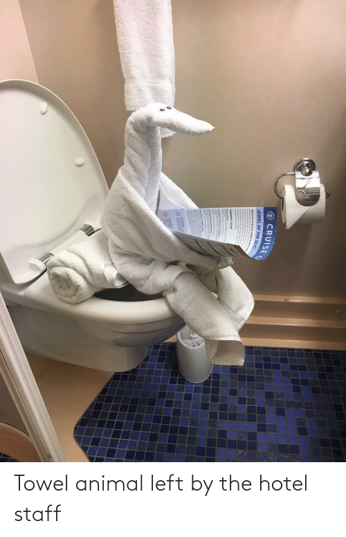 staff: Towel animal left by the hotel staff